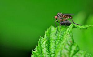 Moscas e mosquitos: entenda o que são e como combater