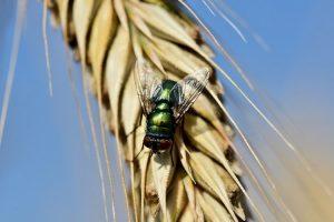 Descubra por que essa época é característica de insetos voadores