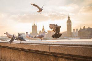 Descubra as vantagens de aderir ao sistema pigeons out